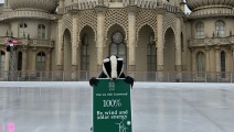Sussex Wildlife Trust Badger at Royal Pavilion Ice Rink